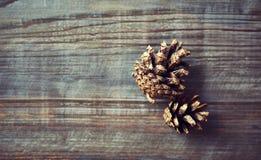 Conos pintados de oro del pino Imagen de archivo