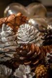 Conos pintados del pino Fotos de archivo