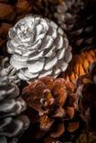 Conos pintados del pino Imagen de archivo