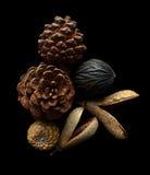 Conos secos del pino Imagen de archivo