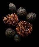 Conos secos del pino Fotos de archivo