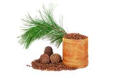 Conos siberianos del pino Imagen de archivo libre de regalías