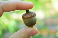 Conos y bellota en la palma En bosque del otoño fotografía de archivo libre de regalías