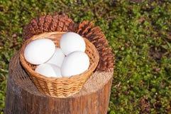 Conos y huevos del pino Imágenes de archivo libres de regalías
