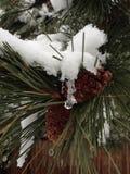 Conos y nieve del pino del invierno imagen de archivo