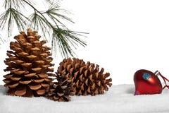 Conos y rama del pino en nieve Foto de archivo