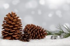 Conos y rama del pino en nieve Imagenes de archivo