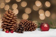 Conos y rama del pino en nieve Fotos de archivo libres de regalías