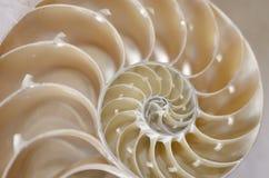 Conque d'escargot de mer Images libres de droits