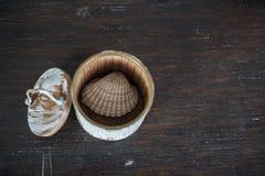 Conque dans la petite case sur la vieille table en bois brune Image libre de droits