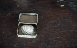 Conque dans la petite case sur la vieille table en bois brune Photographie stock