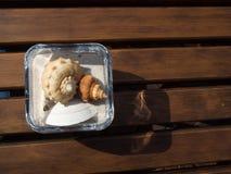 Conque dans la tasse de sable sur la table en bois Image stock