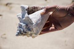 Conque de Shell à la plage au Mexique photographie stock