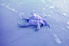 Conque Shell Isolate d'araign?e de Chiragra sur la plage de sable avec Seafoam dans la couleur bleue photos stock