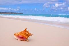 Conque Shell sur la plage. photographie stock libre de droits