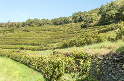 Conques vineyards Stock Photos