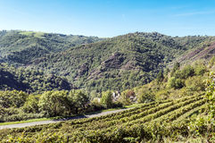 Conques vineyards. In France with mountains in the background on a sunny day stock photos