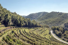 Conques vineyards. In France with mountains in the background on a sunny day royalty free stock images