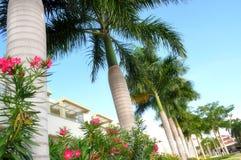 conquistadore el Puerto Rico Royaltyfria Bilder