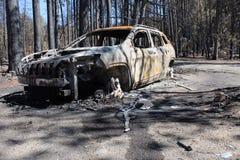 Conséquence du feu de forêt Photo stock