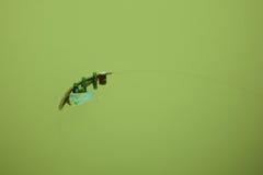 Conscience écologique images stock