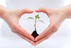 Conscience environnementale et concept de protection Image libre de droits