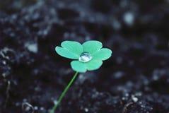 Conscientização ecológica e ambiental Crescimento da vida natural Fotografia de Stock Royalty Free