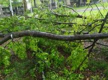 Consecuencia de tormentas Fotos de archivo