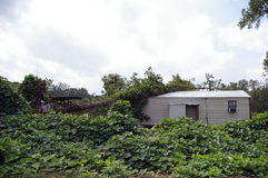 Consecuencias de Rita del huracán Fotografía de archivo