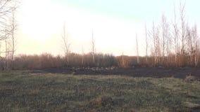 Consecuencias después de extinguir un fuego en un fondo de la puesta del sol, la hierba quemada negra en el campo y el humo, pais almacen de metraje de vídeo