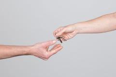 Consegna chiave da una mano della donna ad una mano dell'uomo Fotografia Stock Libera da Diritti