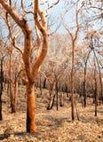 Conseguenze di incendio di arbusti immagini stock libere da diritti