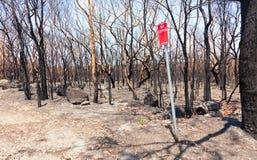 Conseguenze di incendio di arbusti Fotografia Stock Libera da Diritti