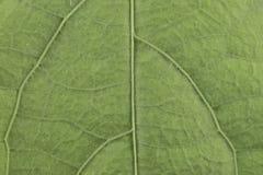 Conseil de texture de modèle de fond de feuille de vert de détail de nature photos libres de droits