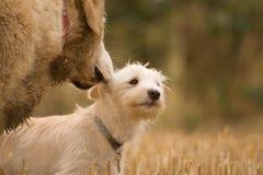 Conselho do cão Fotografia de Stock Royalty Free