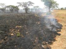 Consequências da floresta destruídas pelo fogo do arbusto foto de stock royalty free