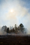 Consequências de um incêndio prescrito Fotografia de Stock Royalty Free