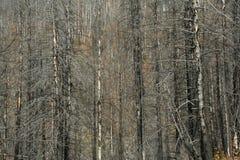 Consequências do incêndio florestal imagens de stock royalty free