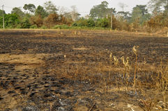 CONSEQUENCE OF BRASS LIGHTS. Sad face of an aficain village half destroyed by the bush fires probably light in the forest by the man to clear the land or to hunt stock photo