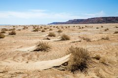 Consequences of Aral sea catastrophe. Sandy salt desert on the place of former bottom of Aral sea.  Royalty Free Stock Photo