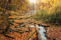 Consequences of deforestation around river in Autumn color Stock Image
