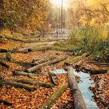 Consequences of deforestation around river in Autumn color Stock Photos
