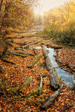 Consequences of deforestation around river in Autumn color Royalty Free Stock Photo