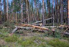 Consequences of hurricane Asta, Russia. The upro Stock Photos