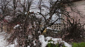 Consequences of a snow storm in spring. Broken flowering trees, snowy branches, snow and flowers, snowfall, climate. Consequences of a snow storm in spring stock footage