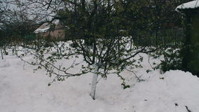 Consequences of a snow storm in spring.A young apple tree with newly blossomed green leaves stands in the snow, climate stock video footage