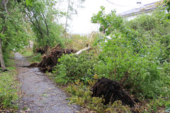 The consequences of the strong wind in Zelenogorsk Royalty Free Stock Images