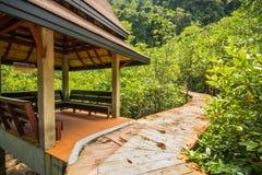Conservação e turista da floresta de Tha Pom Klong Song Nam Mangrove imagens de stock royalty free