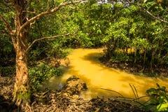 Conservação e turista da floresta de Tha Pom Klong Song Nam Mangrove foto de stock