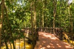Conservação e turista da floresta de Tha Pom Klong Song Nam Mangrove imagens de stock
